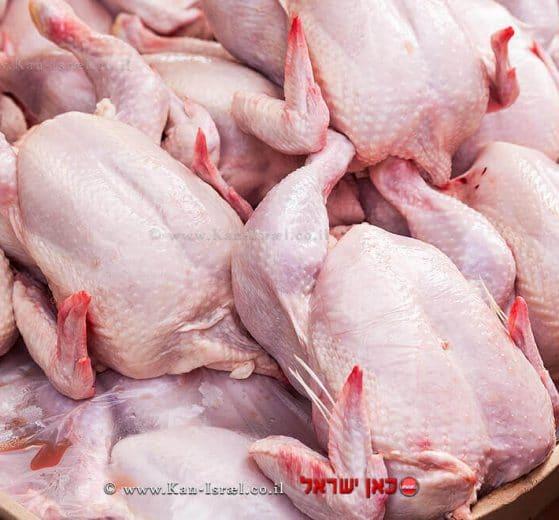 עופות טריים ברשתות השיווק©